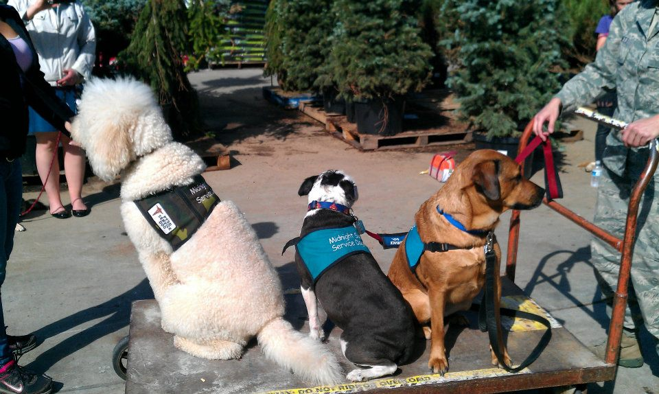 2dc478bf87ce Midnight Sun Service Dogs